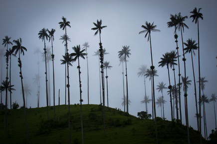 Jonas Schleske, Quindio wax palms (Colombia, Latin America and Caribbean)
