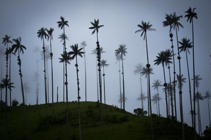 Jonas Schleske, Quindio wax palms (Colombia, Latin America and Caribbean)