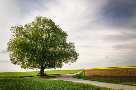 Heiko Gerlicher, Solitary Treescape # 1 (Germany, Europe)