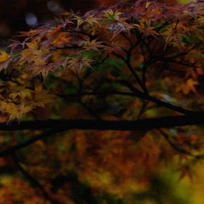 Regis Boileau, Indian summer of Kyoto (Japan, Asia)