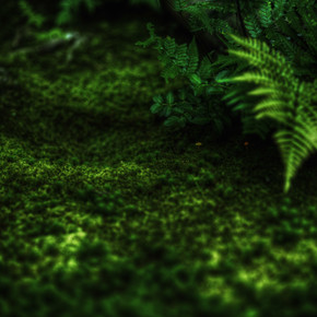 Regis Boileau, A canopy of fern green (Japan, Asia)