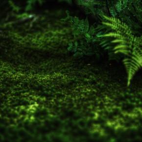 Regis Boileau, A canopy of fern green (Japan, Asia)