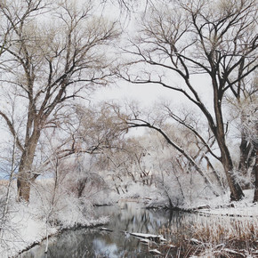 Kevin Russ, Winter Canopy (United States, North America)