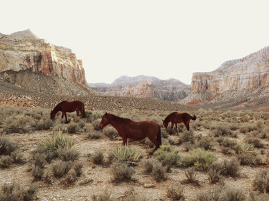 Kevin Russ, Southwest Wild Horses (Bermuda, North America)