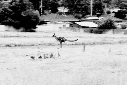 Conny Uhlhorn, Sprungkraft (Australia, Oceania)