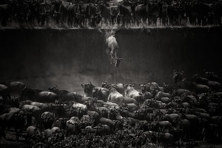 Nicole Cambré, The Great Migration (Tanzania, Africa)