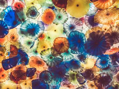 Martin Röhr, Jellyfish (United States, North America)