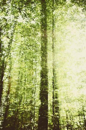 Nadja Jacke, Forest in Autumn (Germany, Europe)