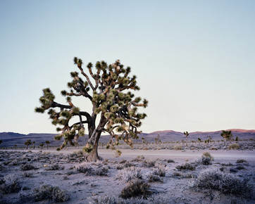 Ronny Ritschel, Joshua Tree - Death Valley.* USA (United States, North America)