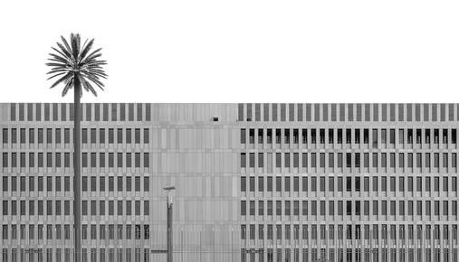 Klaus Lenzen, metropolis palm (Germany, Europe)