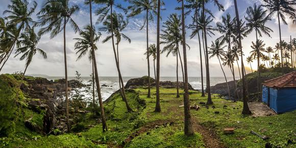Markus Schieder, Palm-Scape (India, Asia)