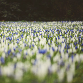 Nadja Jacke, Spring meadow in blue, white and green (Germany, Europe)