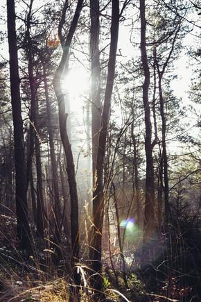 Nadja Jacke, Teutoburger Wald in strahlendem Sonnenlicht (Albania, Europe)