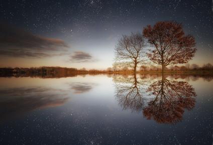 Carsten Meyerdierks, Two Trees (Germany, Europe)
