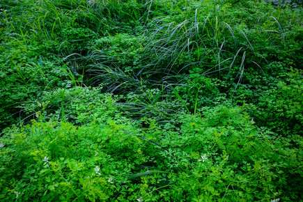 Tal Paz Fridman, Neglected/Natural Garden in the City (Israel and Palestine, Asia)