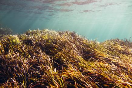 Nadja Jacke, Underwater landscape in sunlight (Spain, Europe)