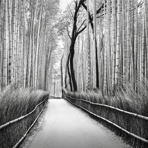 Ronny Behnert, Arashiyama Bambuswald Kyoto (Japan, Asia)