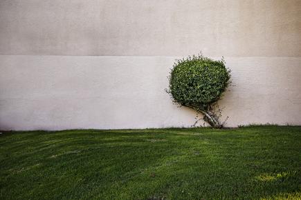 Jeff Seltzer, A Tree (United States, North America)