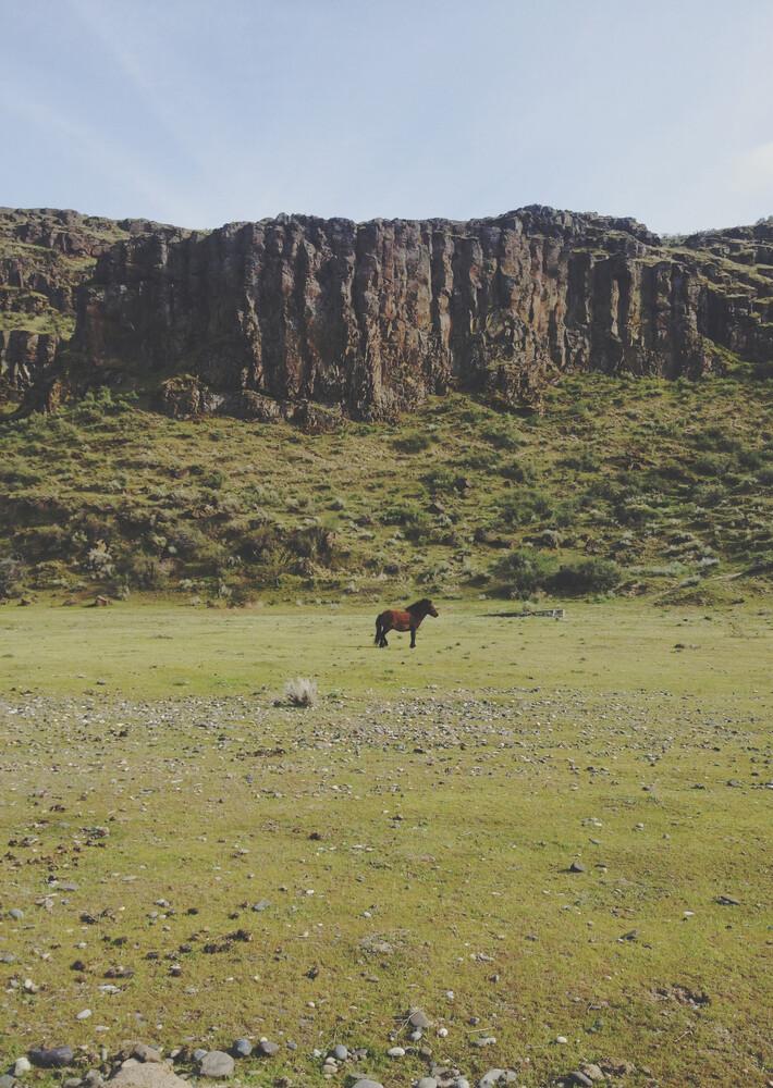 Solo Pony - fotokunst von Kevin Russ