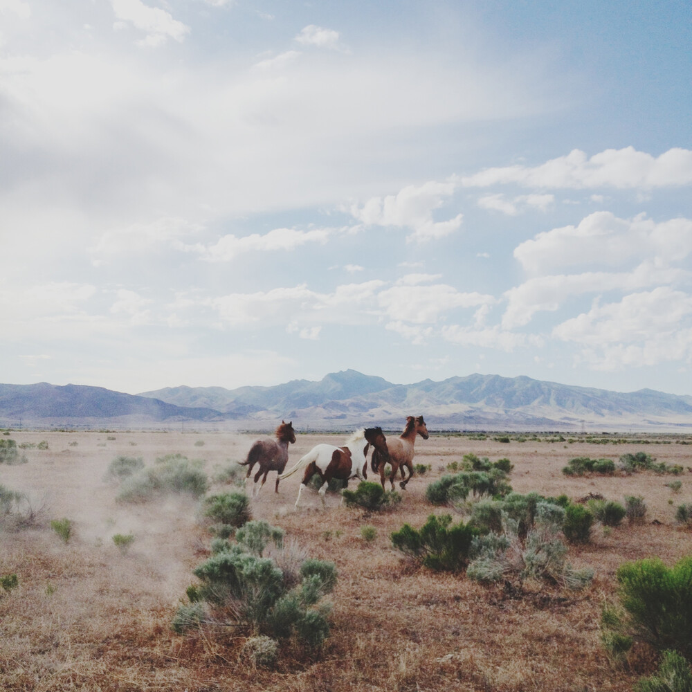 Running Free - fotokunst von Kevin Russ