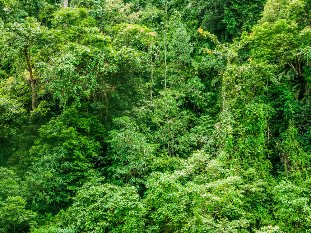 Dschungel Mauer - fotokunst von Johann Oswald