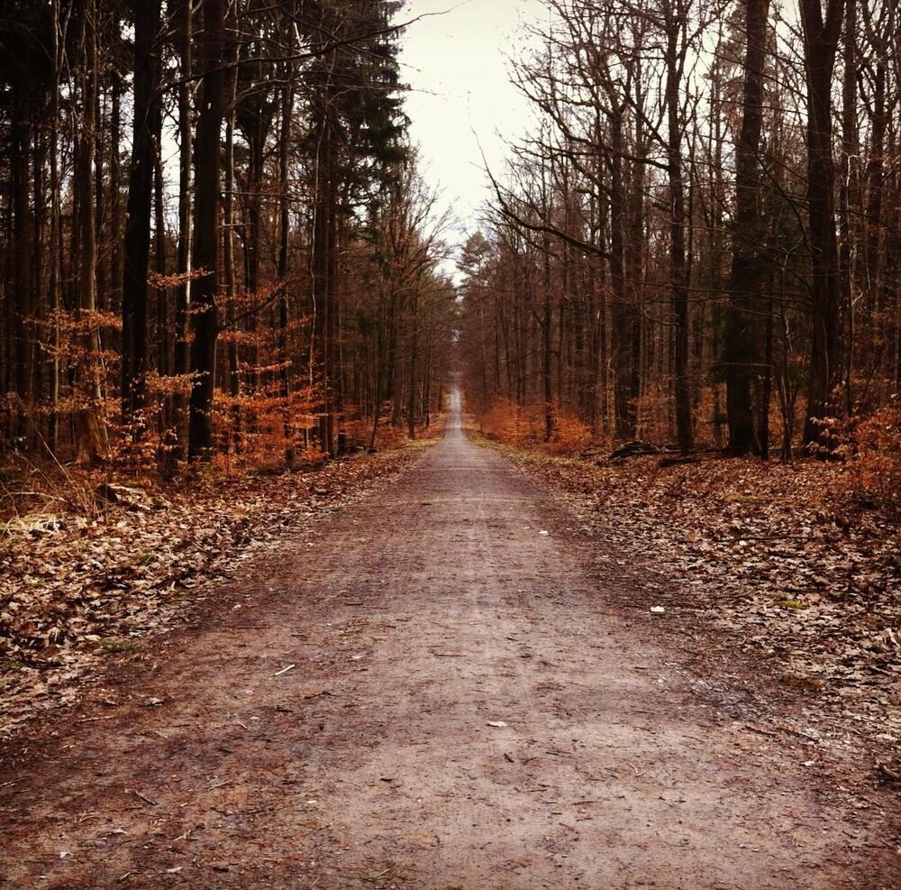 Weg in den Wald - fotokunst von Michael Brandone