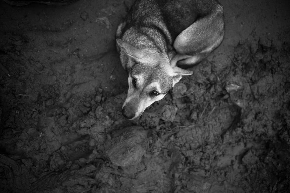 Poor Dog - fotokunst von Dzoni Bagaric