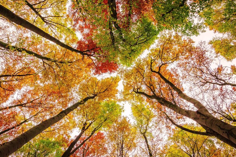 Die Farben des Herbstes - fotokunst von Heiko Gerlicher