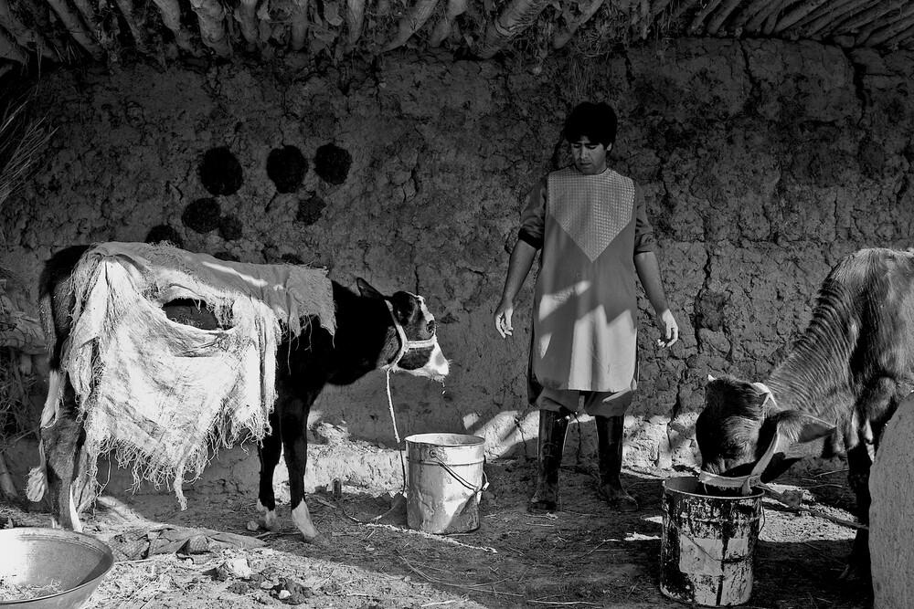 Livestock  - Fineart photography by Rada Akbar