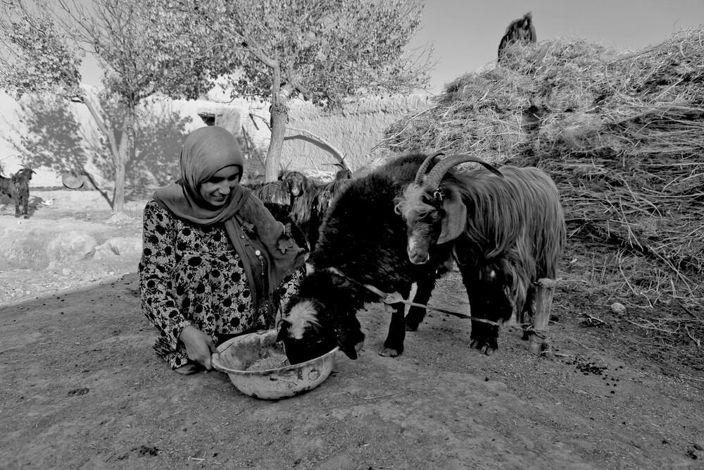 Husbandry and Dairy - fotokunst von Rada Akbar