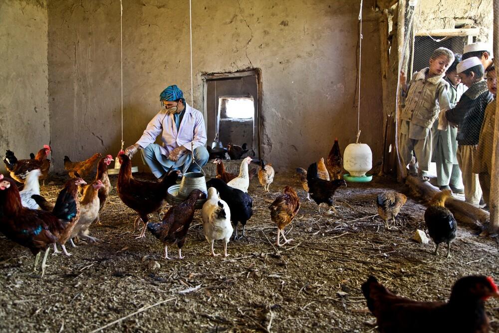 Poultry  - fotokunst von Rada Akbar