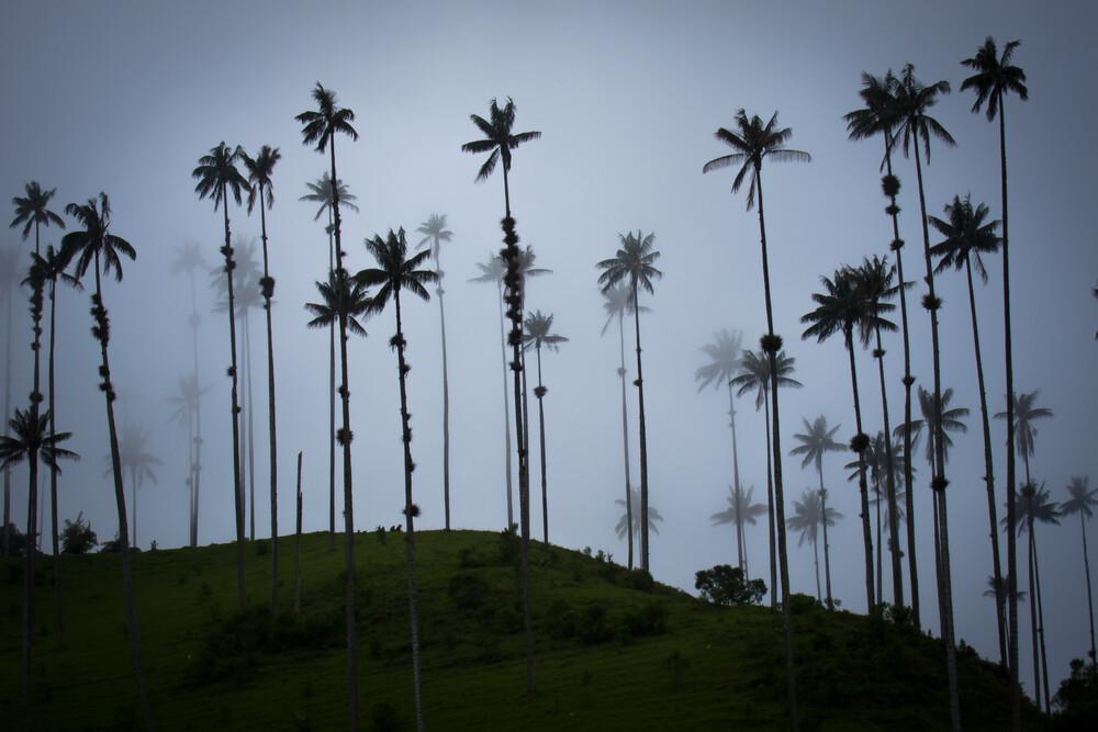 Schemenhafte Palmen - fotokunst von Jonas Schleske