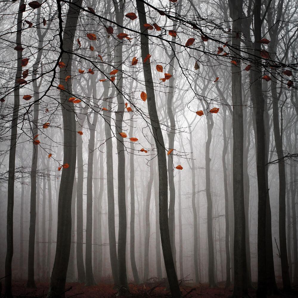 The Beauty Of November - fotokunst von Carsten Meyerdierks