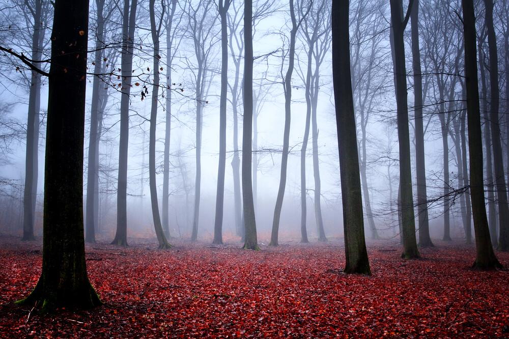 Foggy Mood - fotokunst von Carsten Meyerdierks