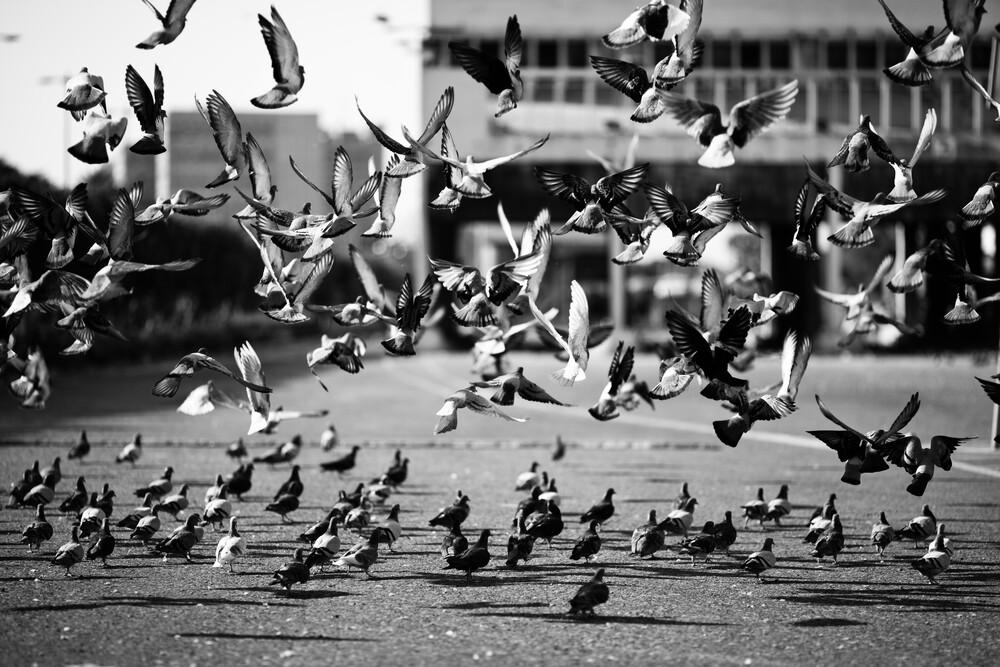 take off - fotokunst von Victor Bezrukov