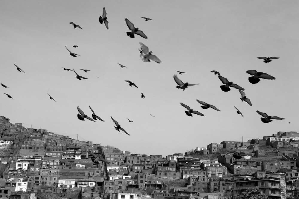 Freedom birds in Kabul - fotokunst von Christina Feldt
