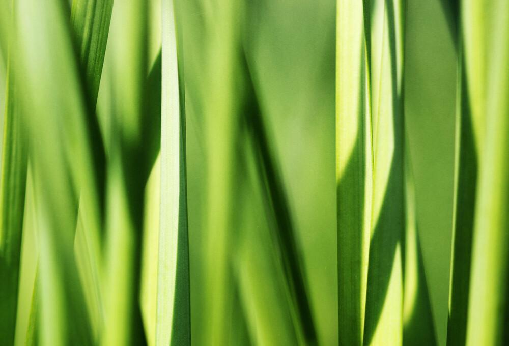 green grass - Fineart photography by Manuela Deigert