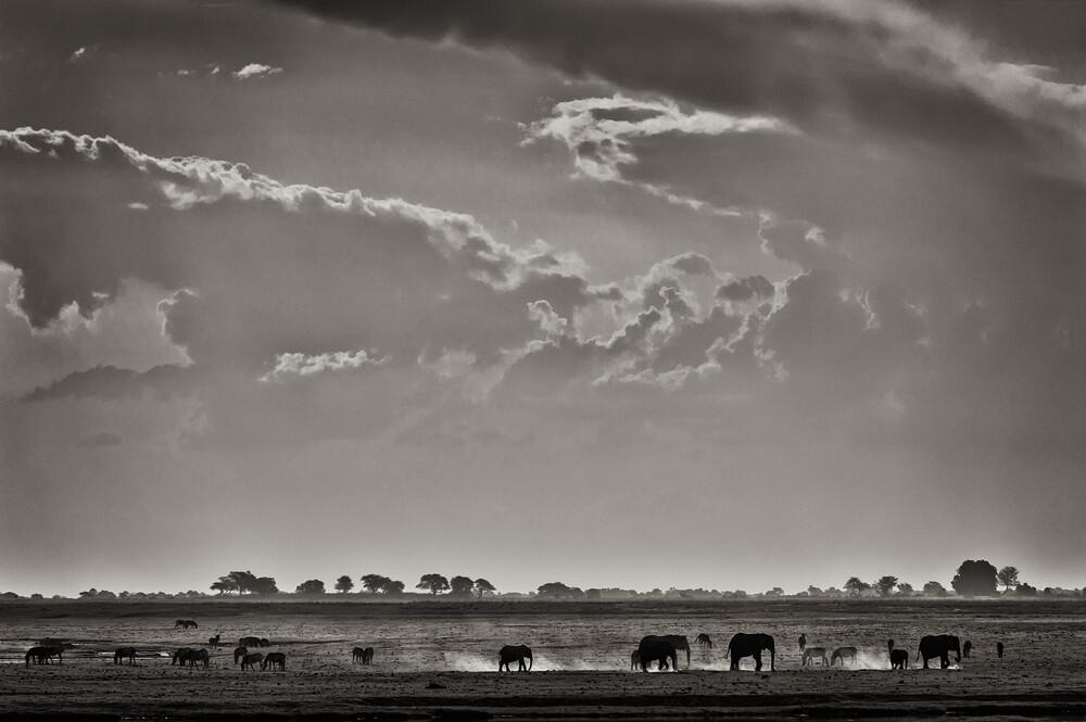 Elefants at Ihaha - Botswana - Fineart photography by Franzel Drepper