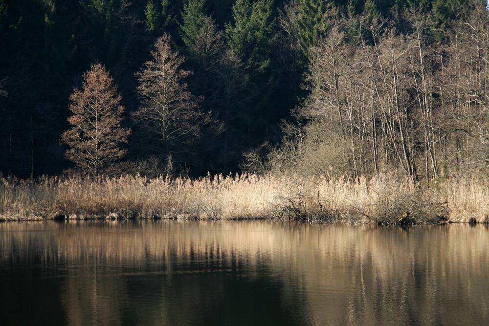 Waldsee1 - fotokunst von Ernst Pini