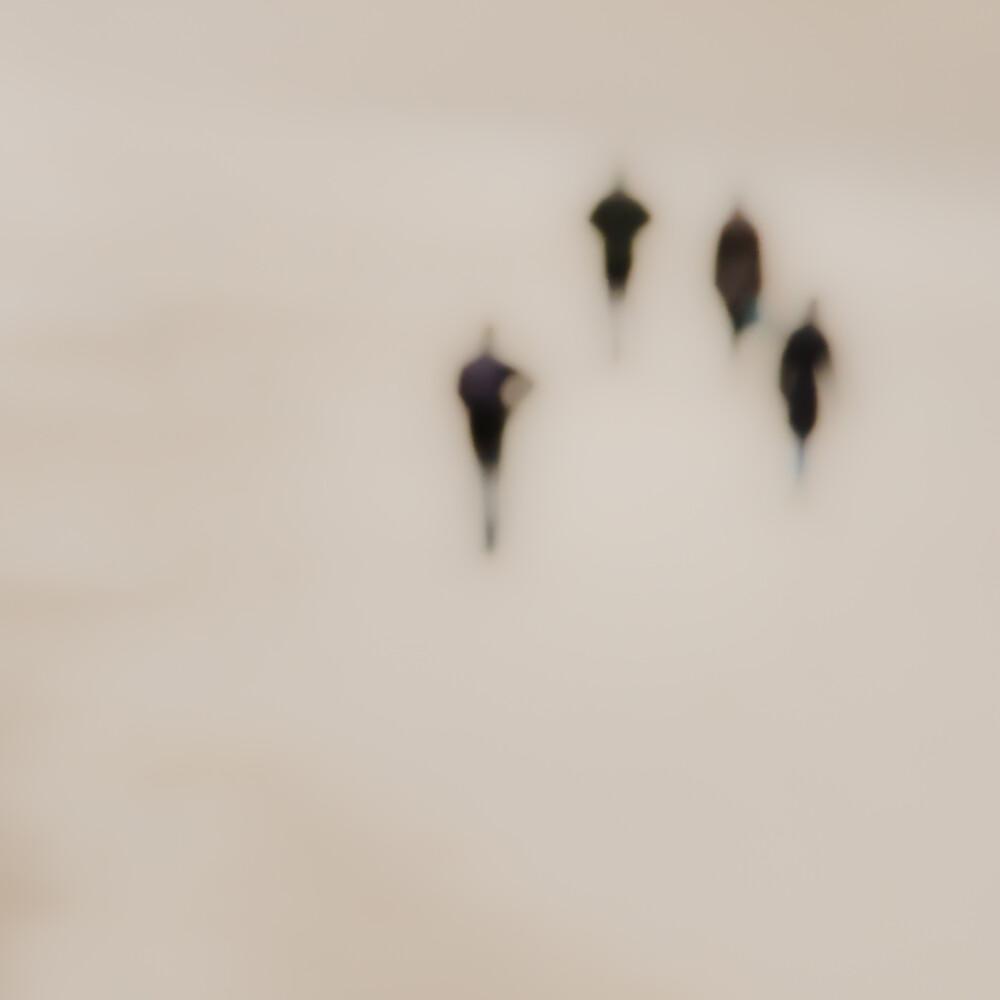 Strandläufer - Fineart photography by Gregor Ingenhoven