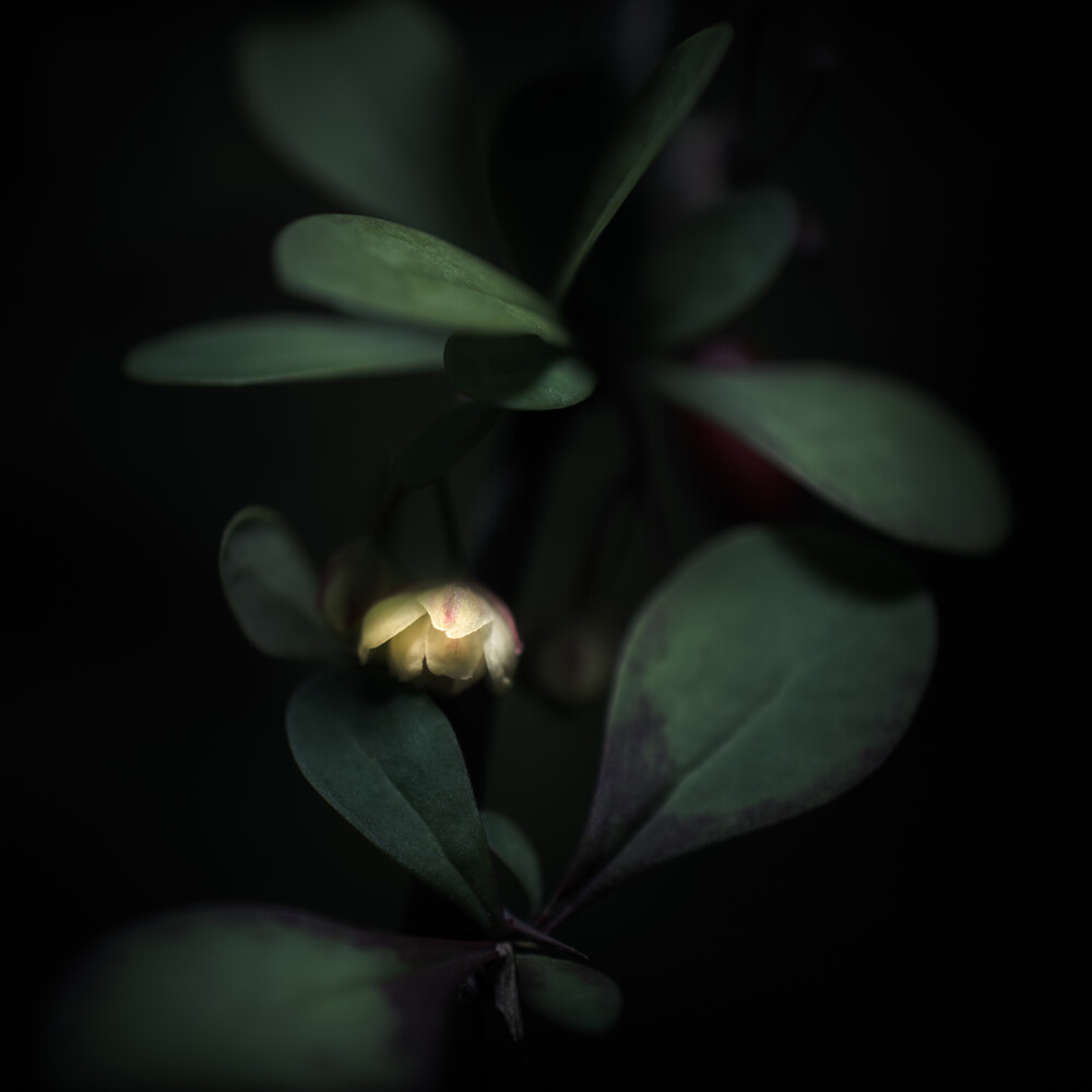 Blüte - Fineart photography by Gregor Ingenhoven