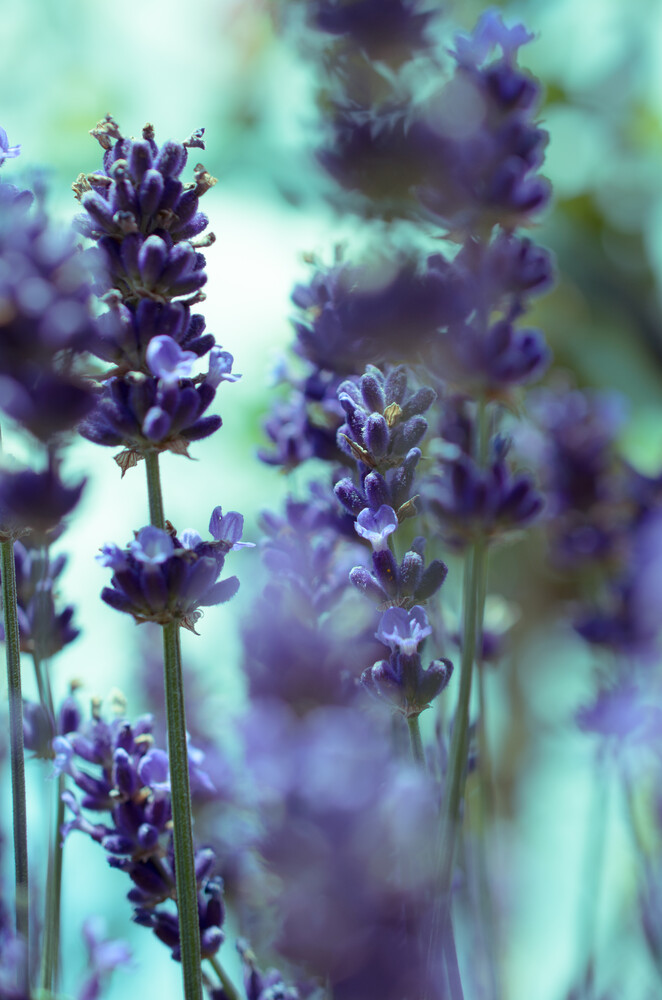 Blumen - Fineart photography by Gregor Ingenhoven