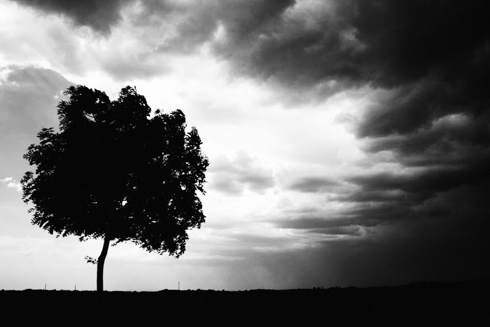 Der Baum - fotokunst von Falko Follert