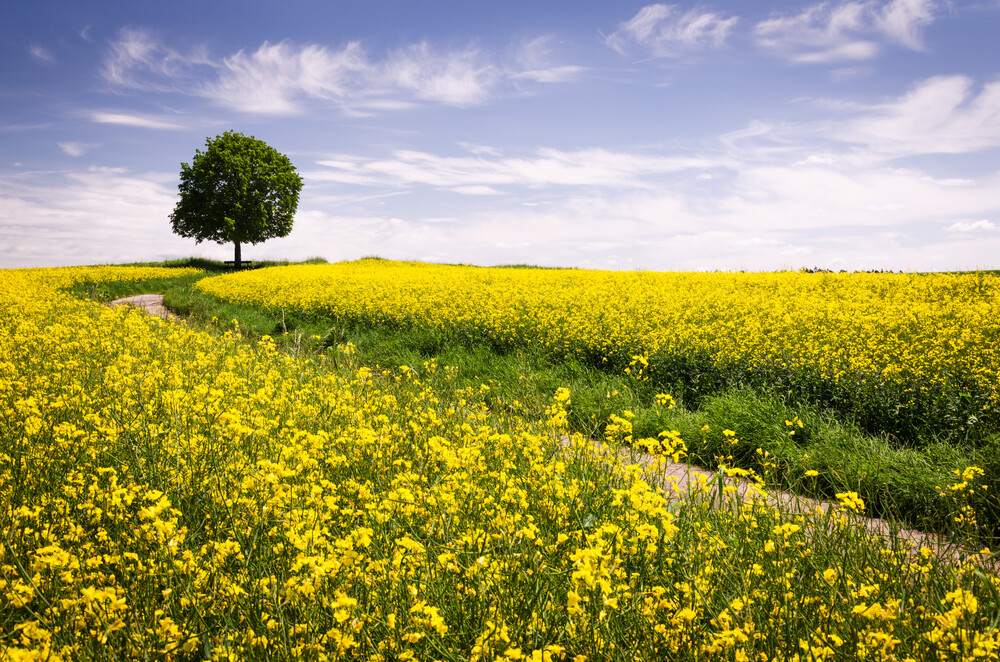 The Joys Of Spring - Fineart photography by Heiko Gerlicher