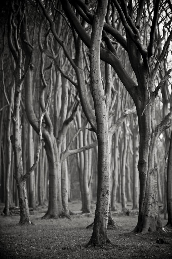 Baum #3 sw - fotokunst von J. Daniel Hunger