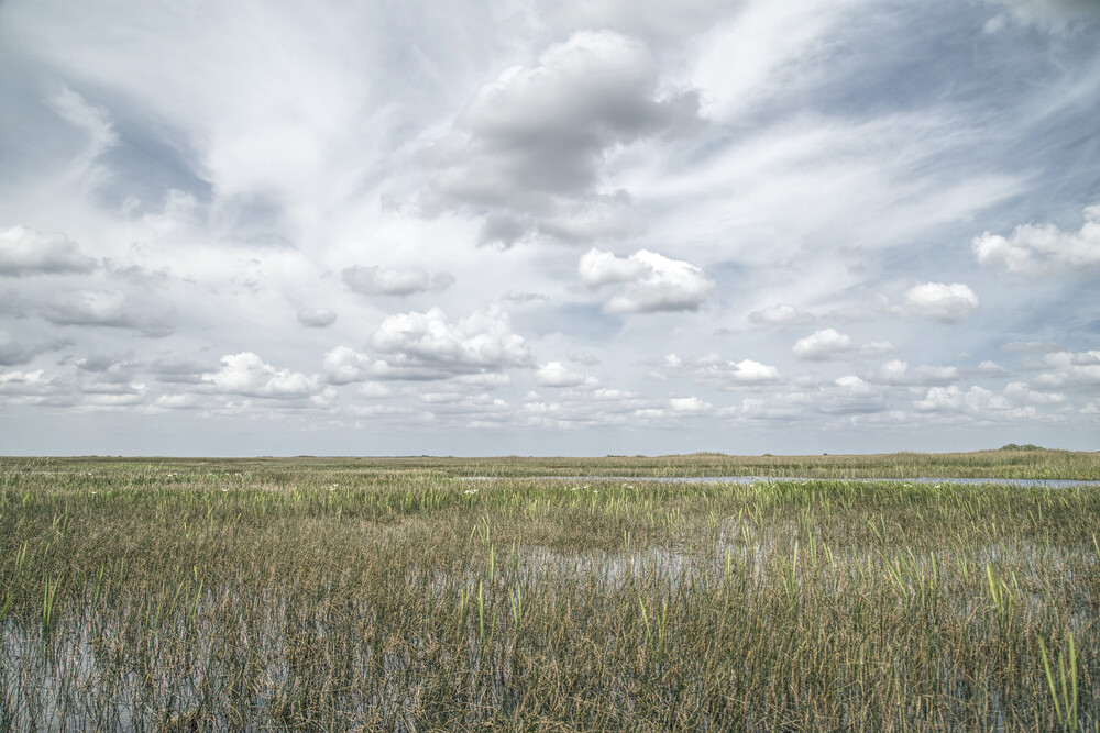 Florida V - Fineart photography by Michael Schulz-dostal