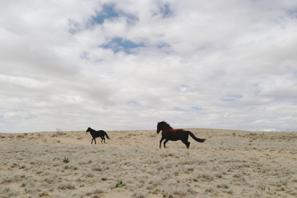 Wild Horses Running in Field - Fineart photography by Kevin Russ