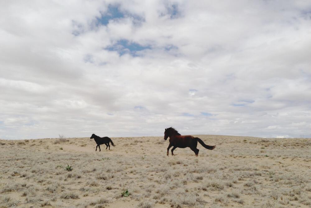 Wild Horses Running in Field - fotokunst von Kevin Russ