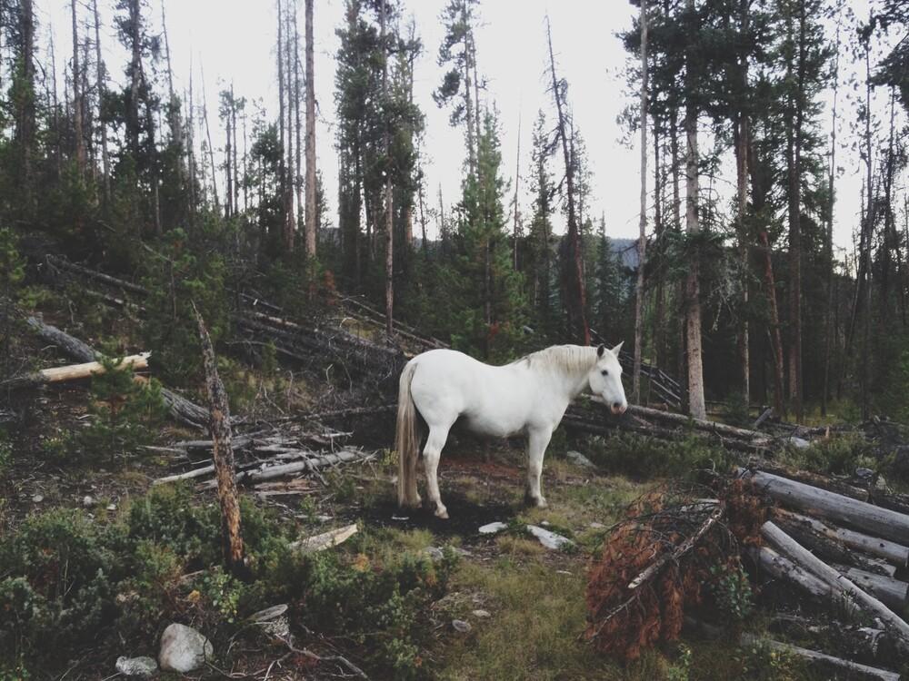 White Forest Horse - fotokunst von Kevin Russ
