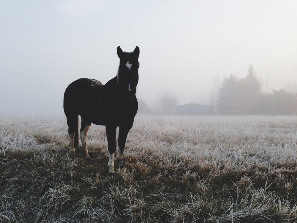 Frosty Morning Horse - fotokunst von Kevin Russ